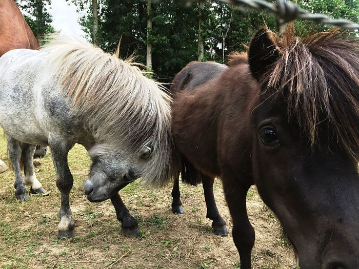 Tough love Love Brother Pony Mini Horse Animal Mammal Animal Themes Group Of Animals Vertebrate Animal Wildlife Two Animals No People Animals In The Wild Sunlight Day Nature Domestic Animals Outdoors Land Plant Field Livestock Standing Animal Body Part