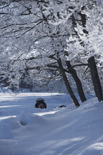 Animal Themes Beauty In Nature Blizzard Cold Temperature Covering Day Environment Extreme Weather Field Frozen Land Mammal Nature No People One Animal Outdoors Plant Powder Snow Snow Snowcapped Mountain Tranquility Tree White Color Winter