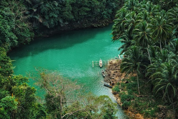bohol nature The Great Outdoors - 2018 EyeEm Awards Philippines Photos Bohol Philippines Bohol Nature Philippines Travel Traveling Outdoor River Loboc Forest Bohol Island Tree Water Swimming Lake High Angle View Plant Green Color Boat Moored Water Vehicle Calm Lakeshore Outrigger Nautical Vessel Mooring Post Lakeside Longtail Boat