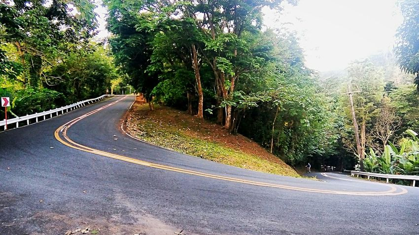 Mount Makiling, Jamboree Road. Right in the middle of a very ling stretch, it poses a great challenge for bikers as they give their last push. Eyeem Philippines Philippines Nature Travel Destinations Forest Mountain Hiking Adventure Tree Road Street Asphalt Sky Bicycle Lane Treelined The Way Forward Summer Exploratorium Visual Creativity The Traveler - 2018 EyeEm Awards The Great Outdoors - 2018 EyeEm Awards The Street Photographer - 2018 EyeEm Awards