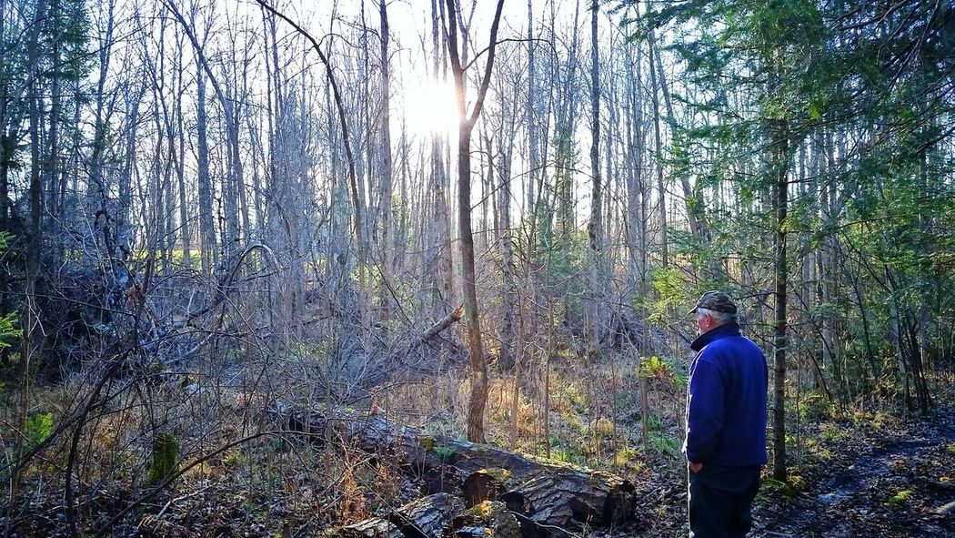 My grandfather in his forest Enchanted Forest Forest Nature Canada Nostalgia Sun And Trees Hiking