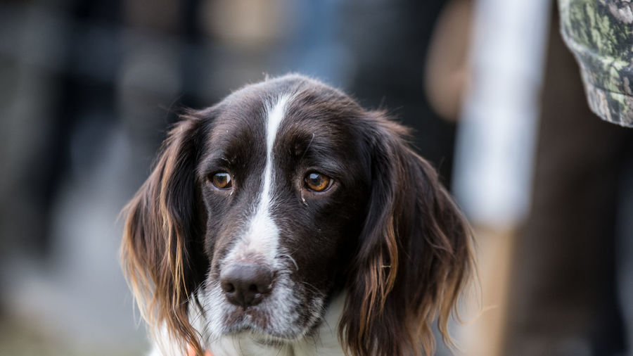 One Animal Dog Canine Pets Domestic Mammal Domestic Animals Focus On Foreground Portrait Looking At Camera Close-up Day Animal Body Part Looking Vertebrate No People Border Collie Animal Eye