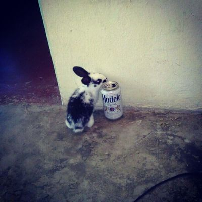 Bunny  Aris Aristoteles Borrachin Party
