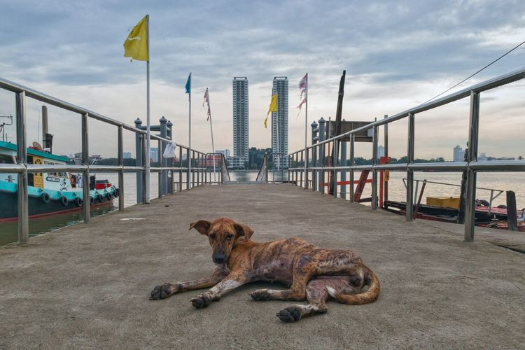Dog Doglover Dog Of The Day Thai Dog Thailand Thai Animal Animal Photography Ugly Dog Port Bridge Morning Sky Morning Light Buildings & Sky Building Twin Towers Bridge Over Water Hdr Edit HuaweiP9 Smartphone Photography Hello Word