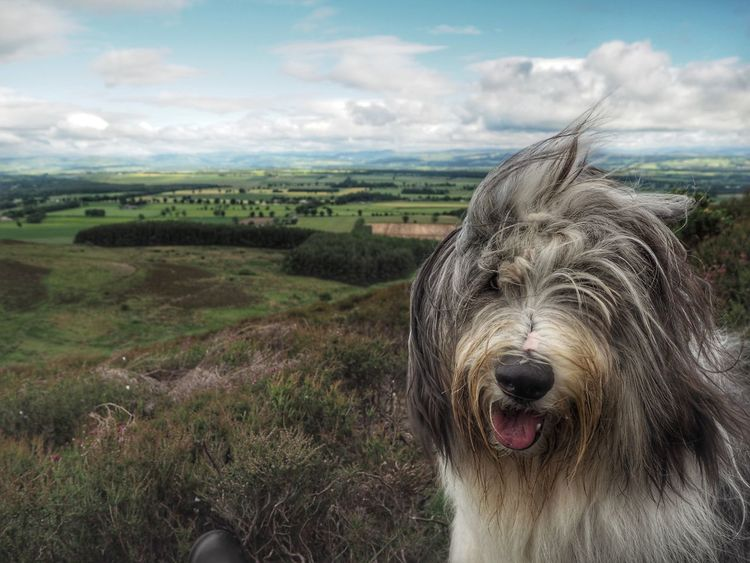 EyeEm Selects Cloud - Sky One Animal Dog Domestic Animals Mammal Animal Themes No People Outdoors Sky Day Nature Pets Landscape Water Portrait Close-up Dundee Scottishrowan Tranquil Scene Pet Portraits