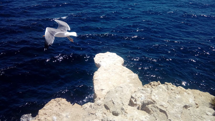 Water Sea Nature Sunlight No People Rock Blue Animal Themes Outdoors One Animal Day Beauty In Nature Tranquility Birds🐦⛅ Animal Mediterranean Sea Tabarca's Island Spain♥