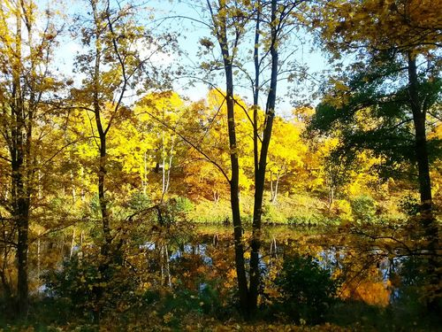 Colour Of Life Look At This Nature Trees Autumn🍁🍁🍁 Yellow EyeEm Foto
