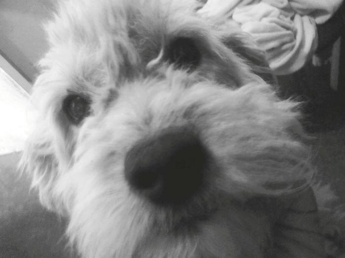 Dog Pet Perro Mascotas 🐶