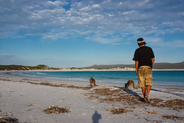 Full Length Rear View Of Man With Kangaroos At Beach Against Sky