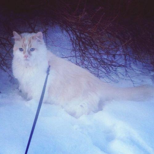 Max the Snowcat <3