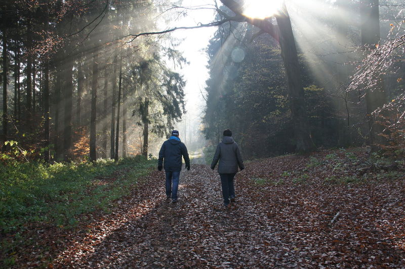 Rear View Of People Walking In The Forest