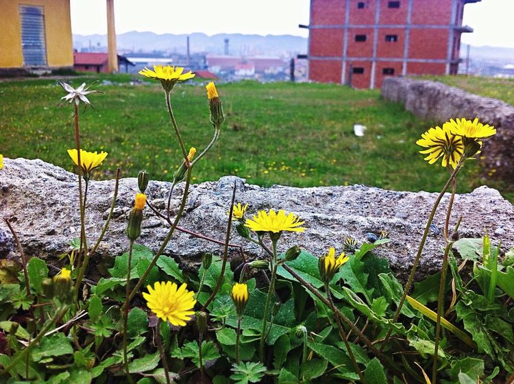 Tirana Albania I ❤️ Tirana I ❤️ Albania Flowers Skyline City View  Yellow Flower Neighborhood Check This Out