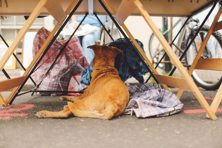 Rear View Of Dog Lying Under Table On Street
