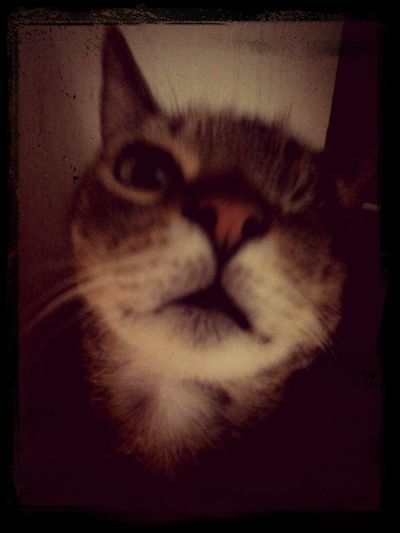 One Eyed Kitty Brat Cat Rescue Kitty Spca Baby my one eyed deVil PeekaboO