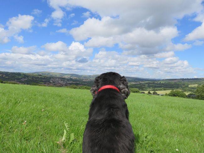 Ci Ci Dog Natur Cymru De Cymru Nature