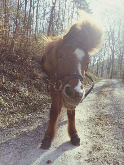 i love my horse ^^