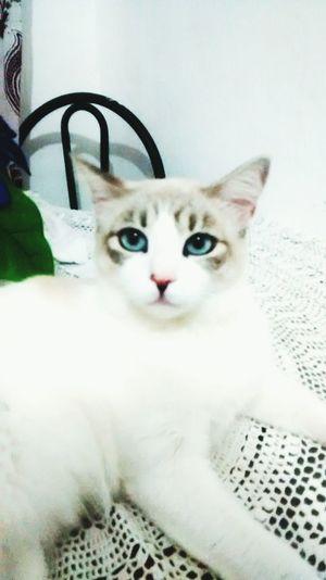 Mycat Cat♡ Gatinha 😍 Hi!