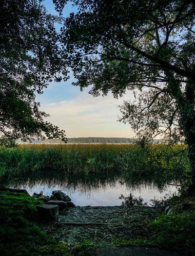 moody Scharmützelsee Moody Bad Saarow Scharmützelsee Brandenburg Germany Deutschland. Dein Tag See Lake Nature Travel Travel Destinations Tranquility Tree Water Sunset Reflection Silhouette Sky My Best Travel Photo