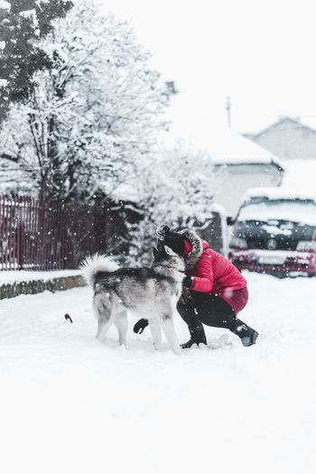 Husky Snow Cold Temperature Winter Domestic Pets One Animal Domestic Animals Mammal Canine Animal Themes Dog Animal Vertebrate White Color Nature Covering Day Clothing Field Warm Clothing Snowing Outdoors Extreme Weather