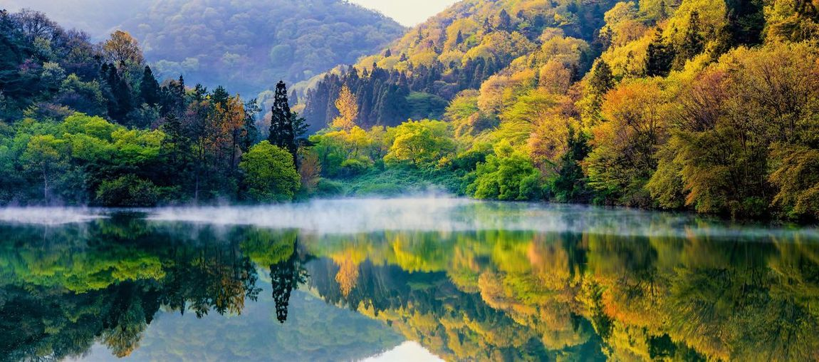 EyeEmNewHere Foggy Morning Autumn Reflection Tree Nature Beauty In Nature Mountain Water Lake