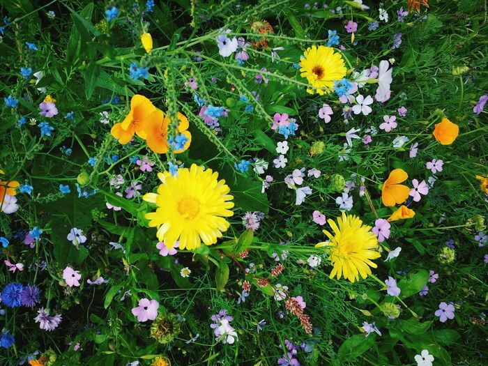 Flowers :) EyeEm Nature Lover