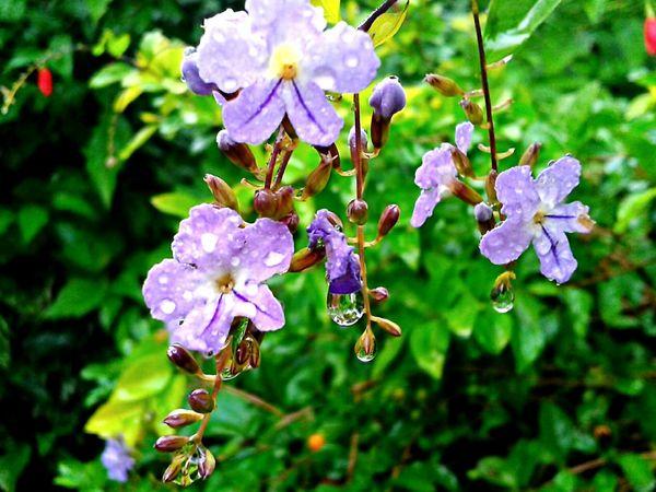 Coisa De Deus Flores Desenho De Deus Natureza Perfeita♡♥ Brasil ♥ Gotas De Agua Gotas Orvalho
