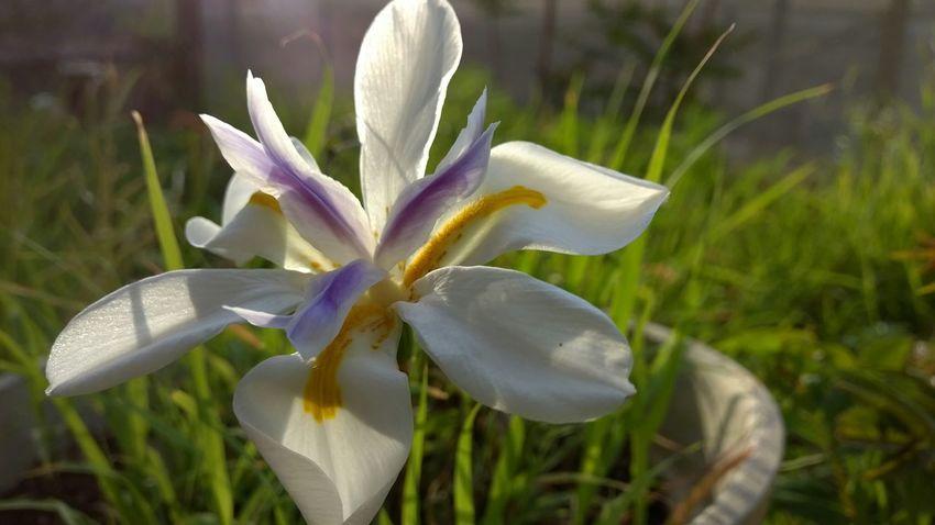Beautiful Nature Closeup Nokiaphography Nokia Lumia 930 Love_nature Nature EyeEm Nature Lover Nature_collection Miss93Jet Nature Photography