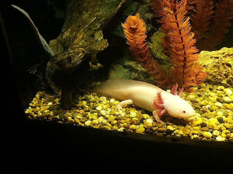 Ancient fish Fish Ancient Civilization Indoors  Close-up Aquarium UnderSea Nature Day Freshness