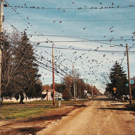 Birds birds!
