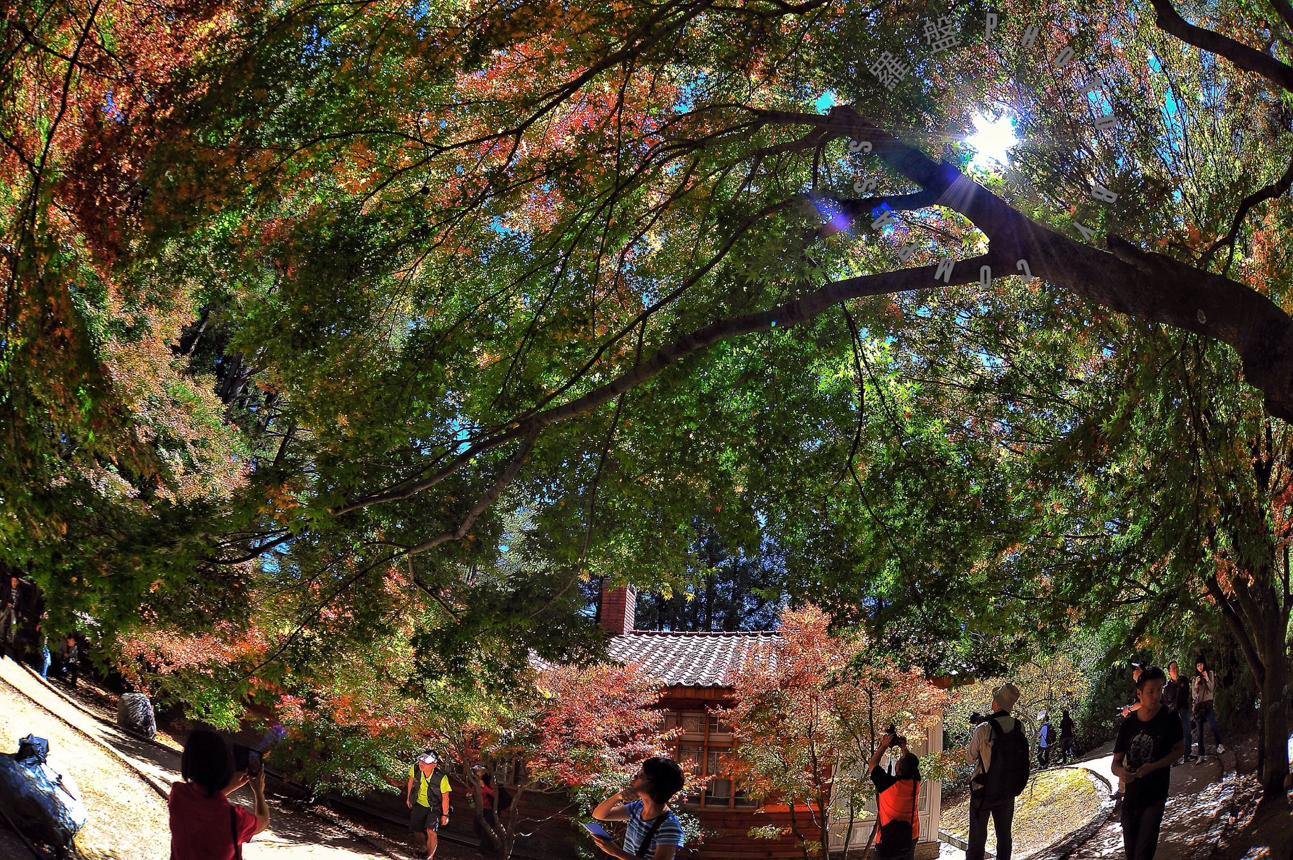 tree, low angle view, branch, growth, lifestyles, sunlight, leisure activity, men, tree trunk, nature, day, large group of people, outdoors, person, green color, park - man made space, sky, beauty in nature, sunny