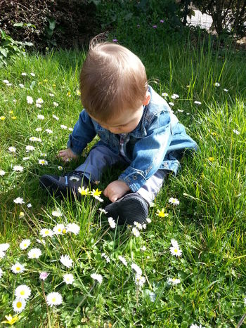 Baby Beautiful Boys Casual Clothing Childhood Elementary Age Enfant Grass Grassy Green Color Herbe High Angle View Innocence Paquerettes Person