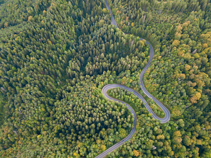 High angle view of plants growing on road