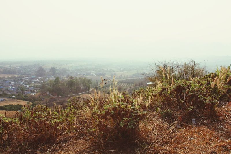Dry Grass Landscape View Valley Foggy Morning Outdoors No People Warm Colors Fall Season in North Thailand South East Asia