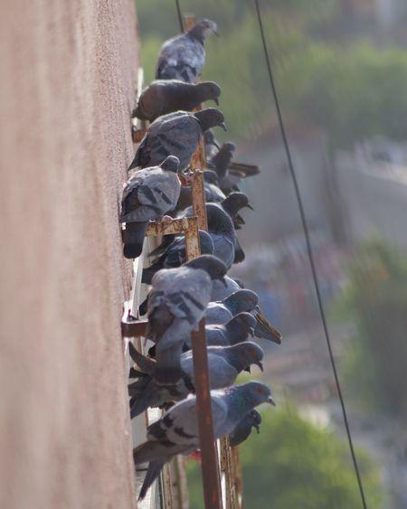 Dove Sena #birds #street #photography #birds #love #EyeEm #eyembestshot #EyeEm Nature Lover #The Week On EyeEm Industry Hanging Metal Industry Sky Close-up