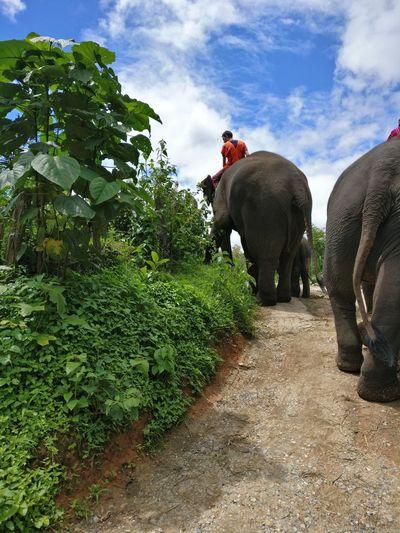 Elephant amidst trees on grass against sky