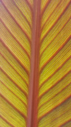 The Purist (no Edit, No Filter) Plant Porn Taking Photos Tropical Plants