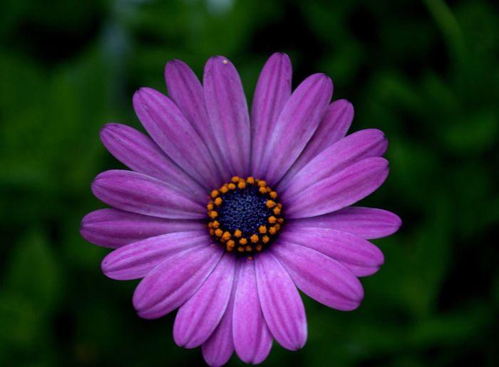 Pétalos Flor
