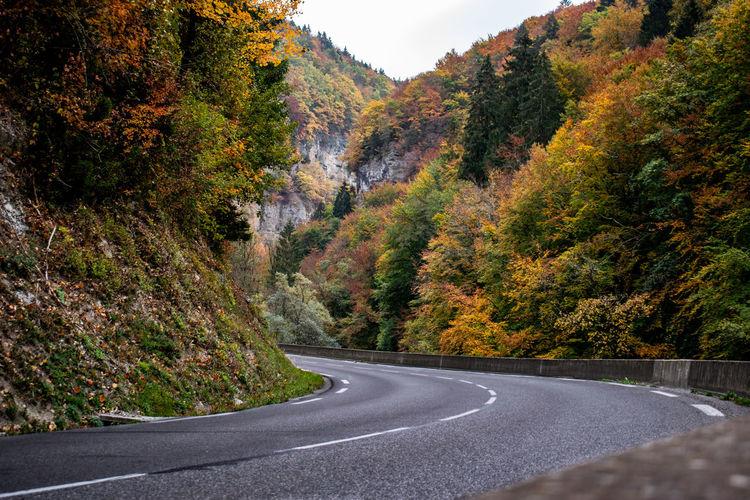 Plant Tree Road