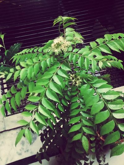 Happy Earth Day 2015 Planting Plants 🌱 Naturelovers Taking Photos Save Our Earth Save Resource For Future Photography