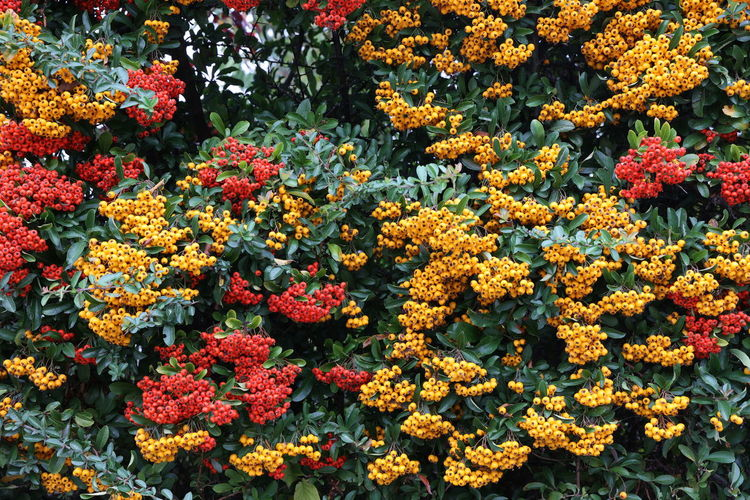 High angle view of flowering plants