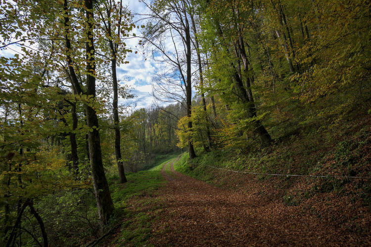 Rheintaler Höhenweg Beauty In Nature Day Forest Grass Green Color Landscape Nature No People Outdoors Pine Tree Road Scenics Sky Tree Tree Trunk WoodLand