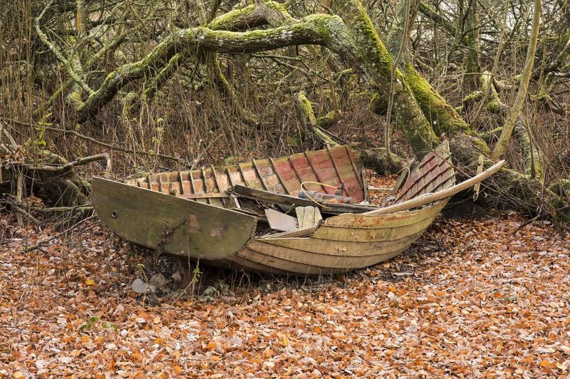 The remains of an old boat resting among Autumnal leaves in a wood near Derwent Water Cumbria UK Alone Autumn Decay Festive Season Old Boat Quiet Trees Wood WoodLand Wreck Branch Broken Chilly Cold Fall Festive Lonley Old Old Dinghy Remote Room For Text Ruin Seasons Silent Still Life