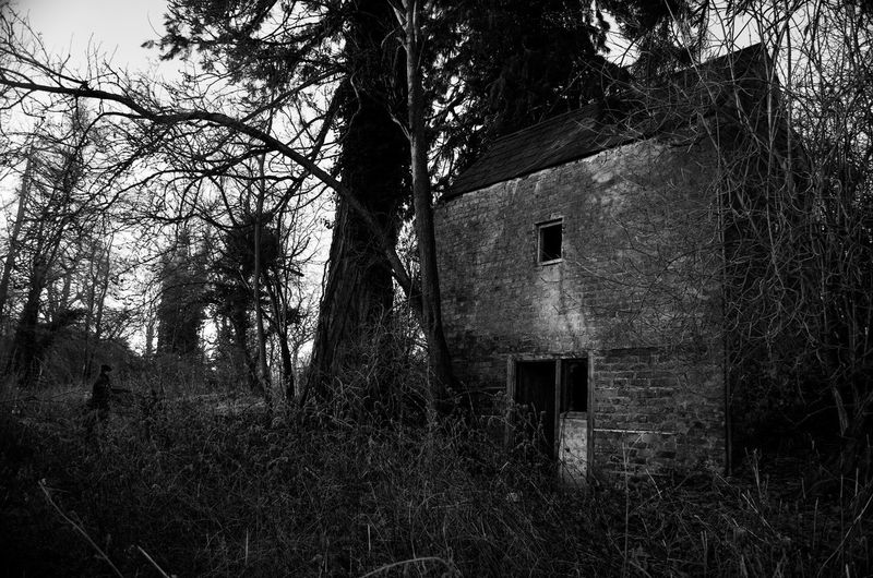 Abandoned house amidst trees in forest