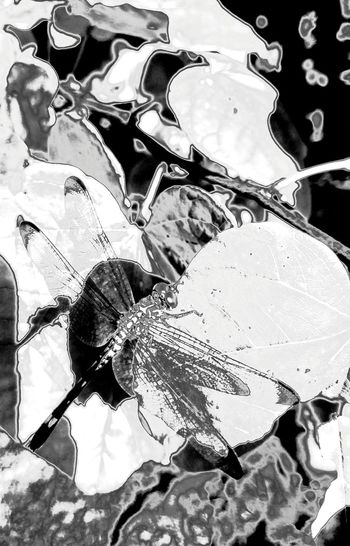 Dragonfly Arabesque Capricho EyeEm Gallery Eyeemblack & White