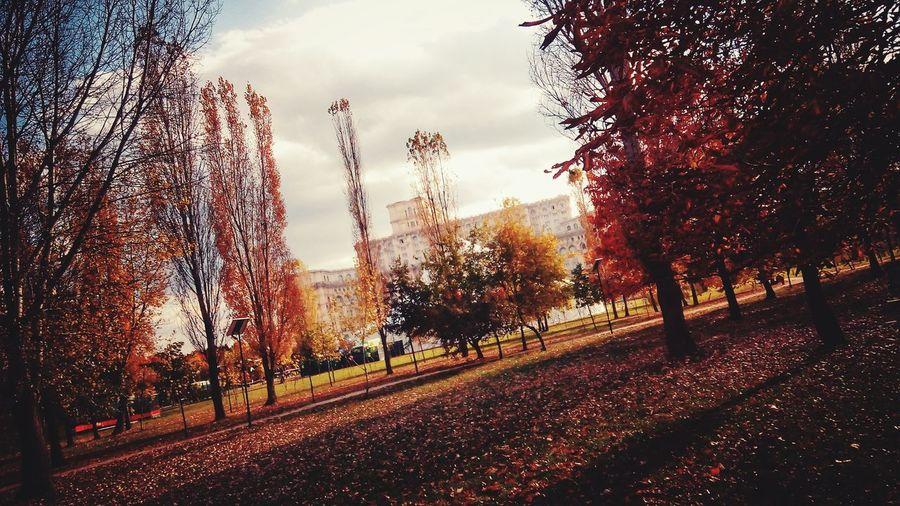 Autumn Colors Autumn Collection Autumn🍁🍁🍁