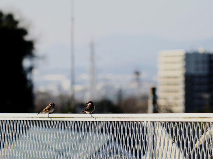 Birds perching on railing against sky