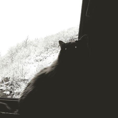 Darkness And Light Dark Cat Mila Fluffy Cat Eyeshadow Cats Catstagram Cats 🐱 Big Love Wintertime