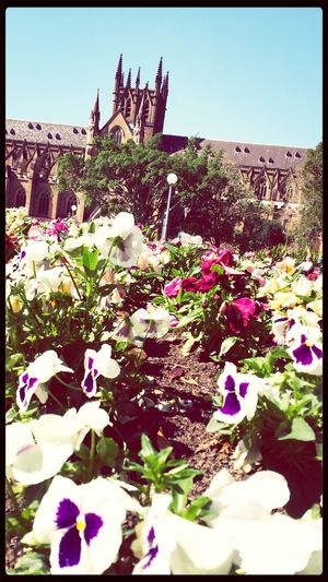 Stmarys Cathedral Flowers Enjoying The Sun