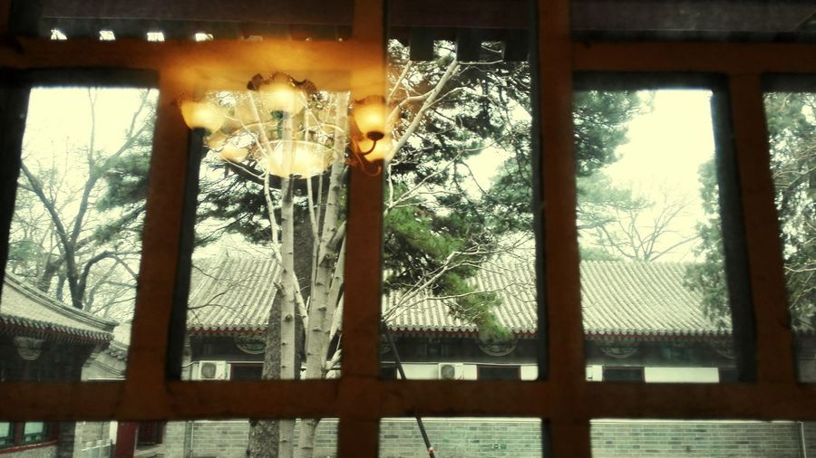 Window Relaxing Chinese Style Enjoying Life Tree Window Reflections Showcase March
