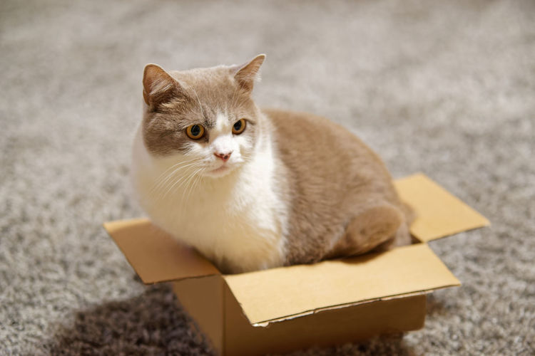 Portrait of a cat in cardboard box